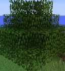 Fast-Leaf-Decay-Minecraft-Mod